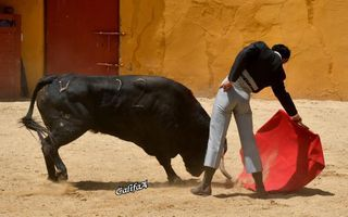 'El Chorlo' e Francisco Montero tentaram na ganadaria Márques Albaserrada (C/Fotos)
