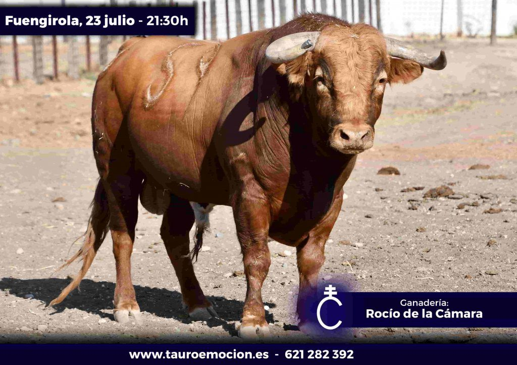 Fuengirola: Os touros Rocío de la Cámara para 23 de Julho