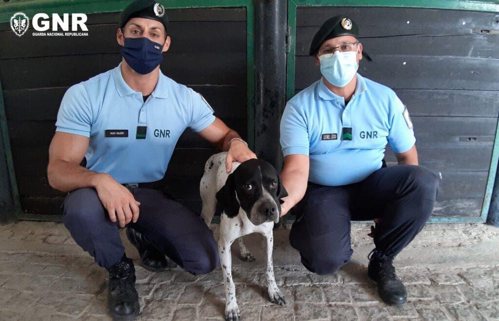 Elvas: GNR resgatou cão perdido