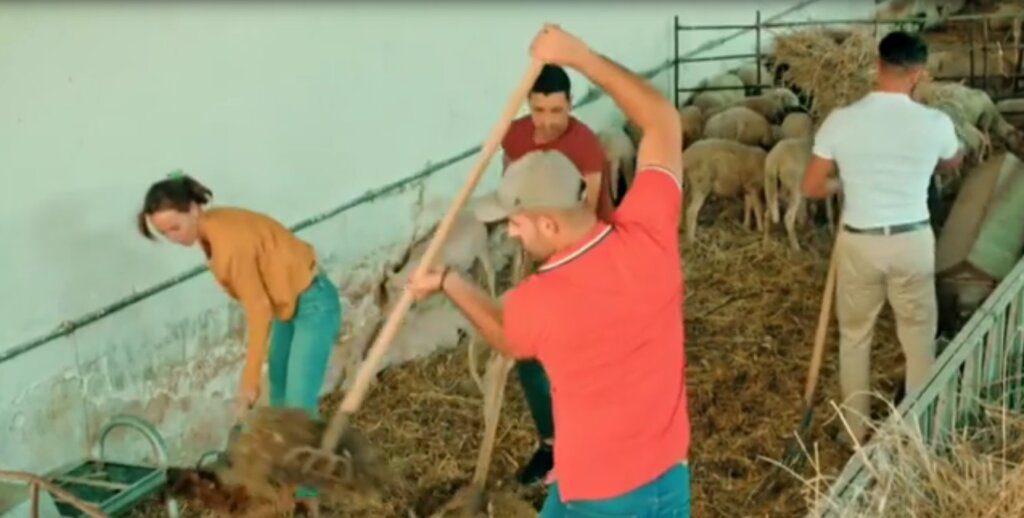 Agricultor: Tiago quase vomita ao limpar estrume